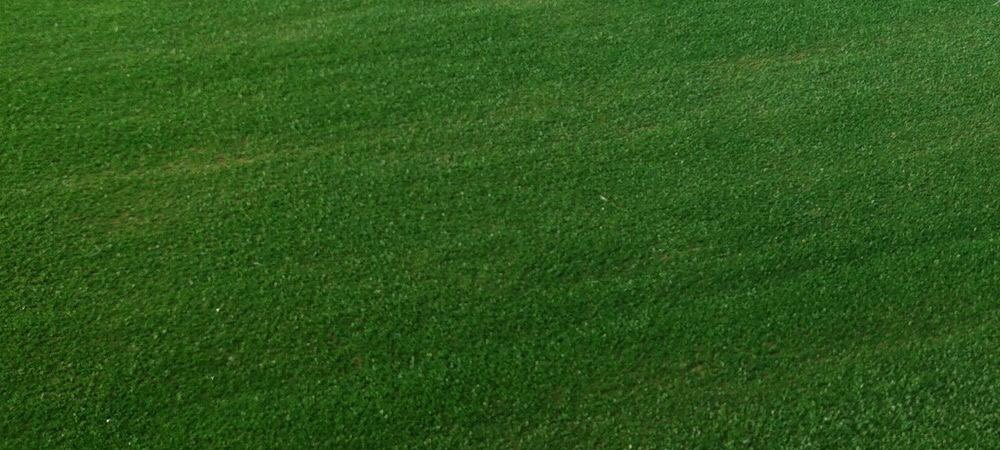 artificial grass sample 5