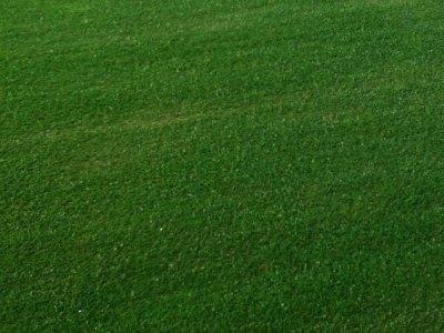 multi use artificial grass